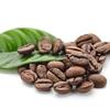 Extracto cafeína